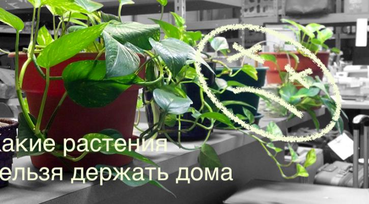 Иллюстрация к статье: «Какие растения нельзя держать дома»
