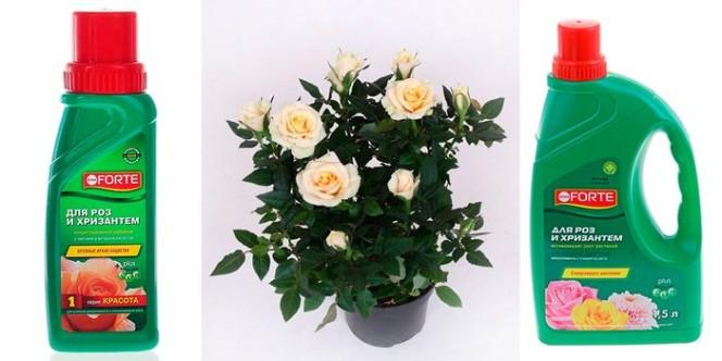 Удобрения для комнатных роз